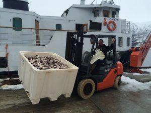 Ervik laks- og ørretoppdrett » Fjord Visjon Lax AS