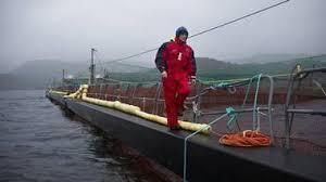 Er dette den rette imagen av oppdretteren isteden » Fjord Visjon Lax AS