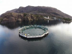 Artikler om lakseoppdrett » Fjord Visjon Lax